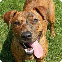Adopt A Pet :: Louise - Athens, GA