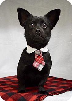 Chihuahua Mix Dog for adoption in Dublin, California - Danny
