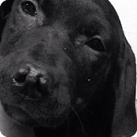 Adopt A Pet :: Onyx n Ebony - Pompton Lakes, NJ