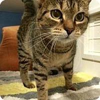 Adopt A Pet :: Martini - Novato, CA