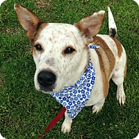 Adopt A Pet :: Lucille 💖 ADOPTED! - Saratoga Springs, NY