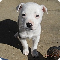Adopt A Pet :: THELMA - Lincolndale, NY