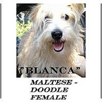 Adopt A Pet :: Blanca (in adoption process) - El Cajon, CA
