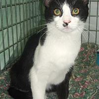 Adopt A Pet :: Peter - Germansville, PA