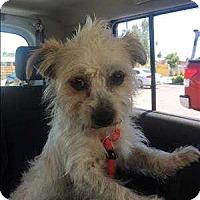 Adopt A Pet :: Jagger - Encino, CA