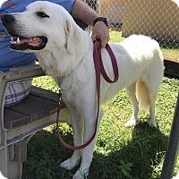 Adopt A Pet :: Gabe - Kyle, TX