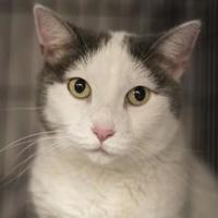 Adopt A Pet :: Sweet D - Elk Grove Village, IL