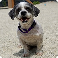 Adopt A Pet :: Buckwheat - Wheaton, IL