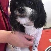 Adopt A Pet :: Panda - Dawson, GA