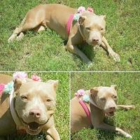 Adopt A Pet :: Betty - Umatilla, FL