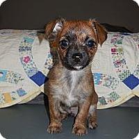 Adopt A Pet :: Armani - Hilliard, OH
