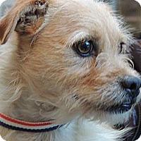 Adopt A Pet :: Keegan - Windham, NH