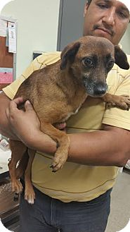 Terrier (Unknown Type, Small) Mix Dog for adoption in Freeport, Maine - Layla