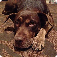 Adopt A Pet :: Luna - Gig Harbor, WA