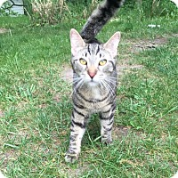 Adopt A Pet :: Elton - Byron Center, MI