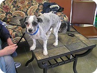 Shih Tzu Mix Dog for adoption in Creston, British Columbia - Dixie