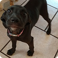 Adopt A Pet :: Mary - Tampa, FL