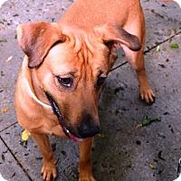 Adopt A Pet :: Duke - Kalamazoo, MI