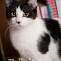 Adopt A Pet :: Felicity - Salem, OH