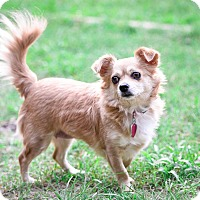 Adopt A Pet :: Shadow - Virginia Beach, VA
