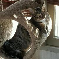 Adopt A Pet :: Stardust - Whiting, IN