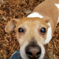 Adopt A Pet :: Enzo aka Weebles - Corvallis, OR