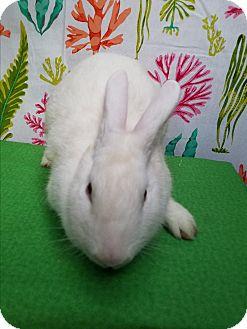 Florida White Mix for adoption in West Palm Beach, Florida - Marshmallow