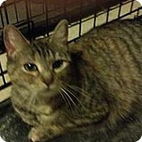 Adopt A Pet :: Paris - Pittstown, NJ