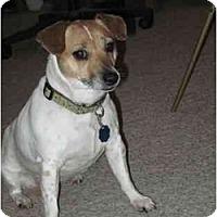 Adopt A Pet :: Little Bit - Omaha, NE