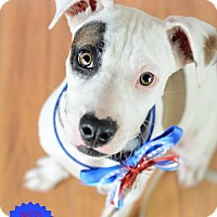Adopt A Pet :: Linda - Bradenton, FL