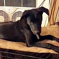 Adopt A Pet :: Stuey - Laconia, IN