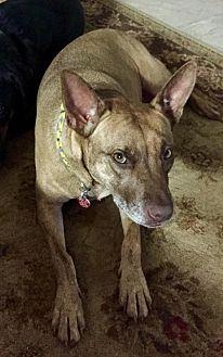 Terrier (Unknown Type, Medium) Mix Dog for adoption in Winder, Georgia - Roxie 2