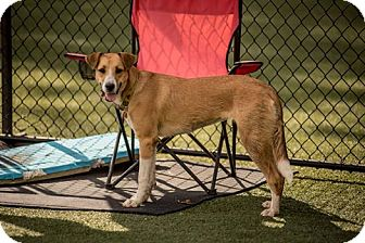 Collie Mix Dog for adoption in simpsonville, South Carolina - Hera