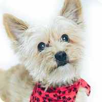 Adopt A Pet :: Vance - New Castle, PA