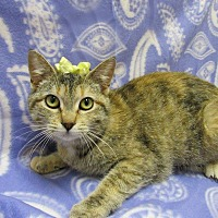 Adopt A Pet :: TOPAZ - Lexington, NC