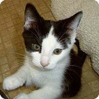 Adopt A Pet :: ARTEMIS - Medford, WI