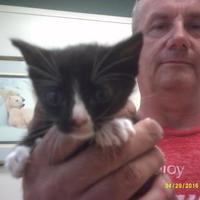 Adopt A Pet :: 31461019 - Huntsville, TX