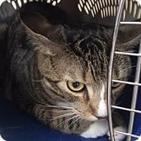 Adopt A Pet :: JJ - San Antonio, TX