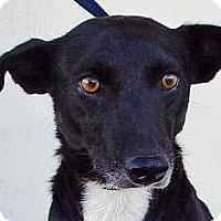Adopt A Pet :: Sabrina - Oklahoma City, OK