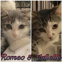 Adopt A Pet :: Romeo & Juliette - Whitehall, PA