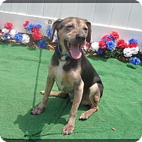 Beagle Dog for adoption in Marietta, Georgia - PARKER