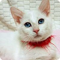 Adopt A Pet :: Pearl- RC PetSmart - Rancho Cucamonga, CA