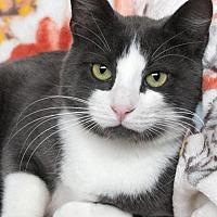 Adopt A Pet :: Smokey - St Louis, MO
