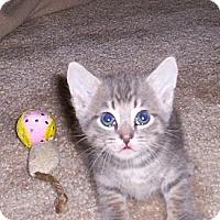 Adopt A Pet :: Carlos - Orlando, FL