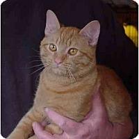 Adopt A Pet :: Garfield - Chesapeake, VA