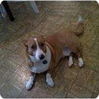 Adopt A Pet :: Snoopy - Murfreesboro, TN