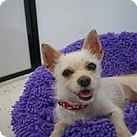 Adopt A Pet :: FINLEY - Salt Lake City, UT