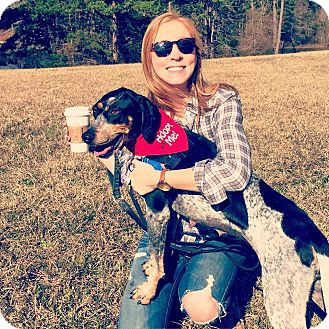 Pointer/Bluetick Coonhound Mix Dog for adoption in Raleigh, North Carolina - Ivy