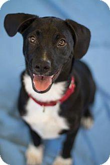 Hound (Unknown Type) Mix Puppy for adoption in Bradenton, Florida - Oreo