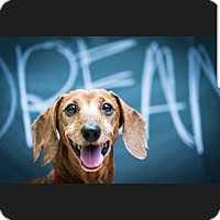 Adopt A Pet :: Citizen Kane - Decatur, GA